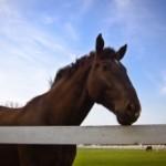 鞍数(くらかず・くらすう)—–乗馬経験回数の数え方