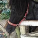 10鞍目―斜め手前/馬の反動と腹痛その2