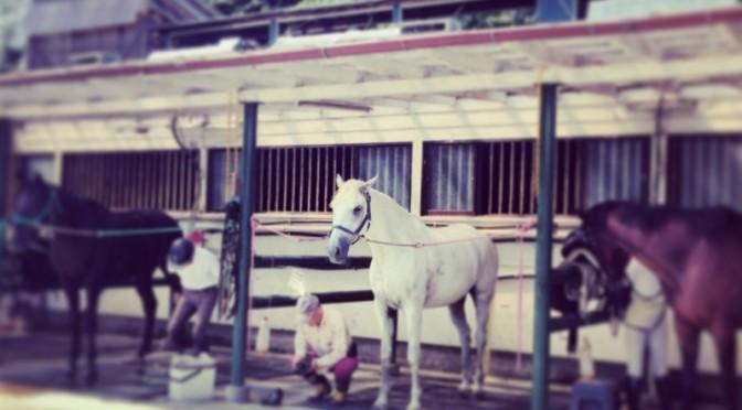 13鞍目―同じ乗馬クラブでレッスンを続ける意味