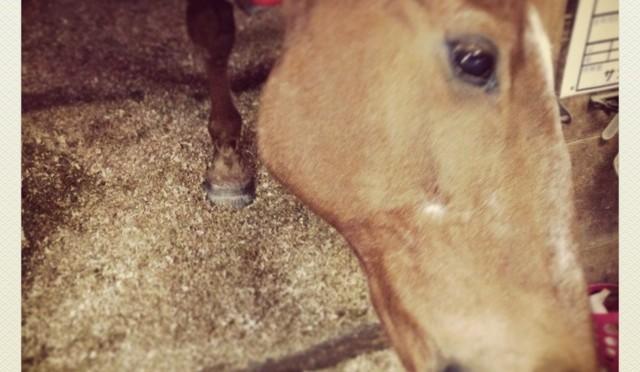 馬の知能は人間でいうと何歳くらいなの?