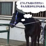 22鞍目(前編) ―右に行きたい気分の馬と前肢旋回(まえあしせんかい)