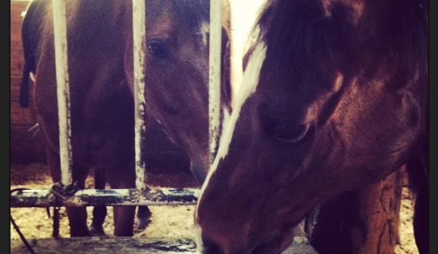 36鞍目(後編)― 初級クラスと中級クラスの馬の違い