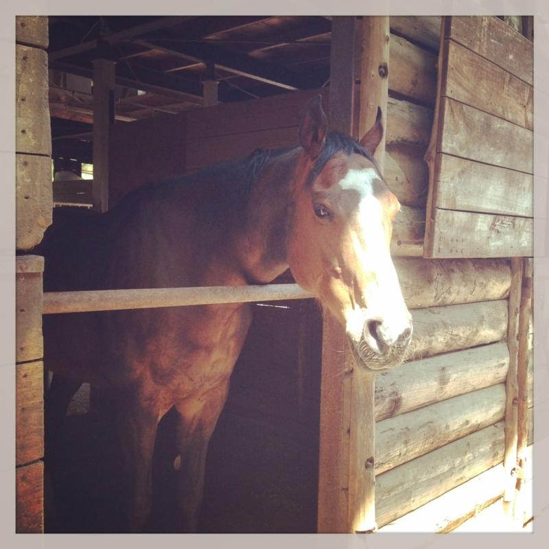 27鞍目-馬は自分の馬房を意外と気に入っている?の巻