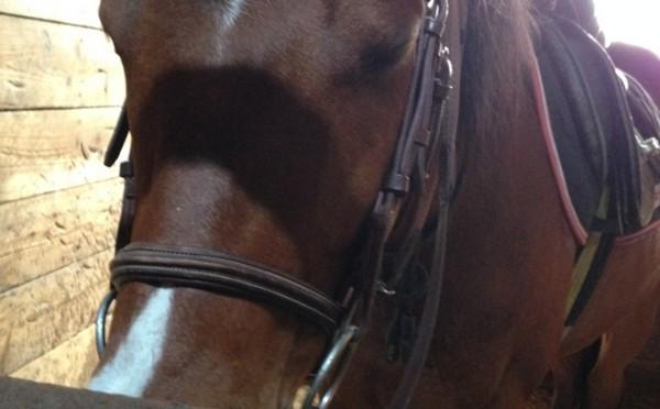 32鞍目-競走馬ステイゴールドのご子息が相棒