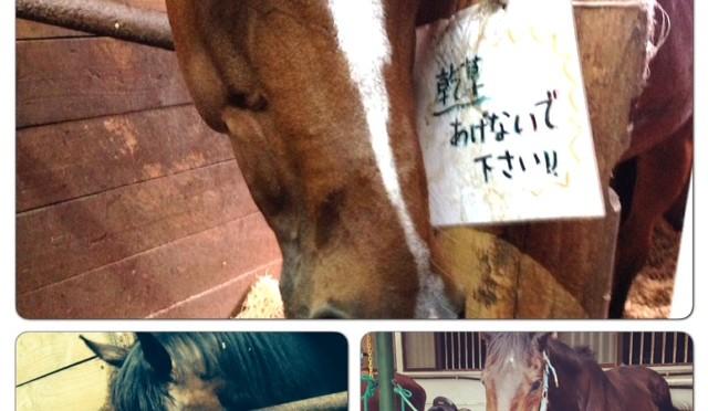 37鞍目―立つ・座る・座るの軽速歩と口の硬い馬