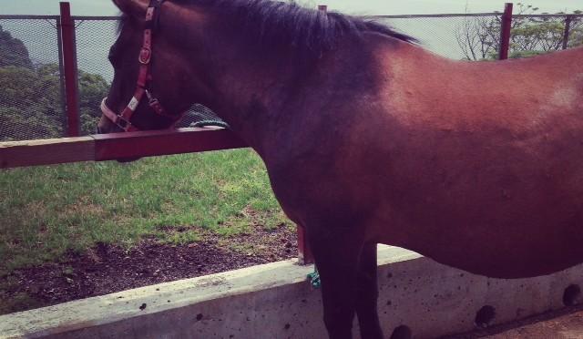 【外乗】木曽馬に乗る その1(サドルバック牧場)