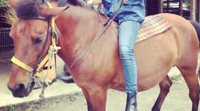 【外乗】木曽馬に乗る その7(雑感)