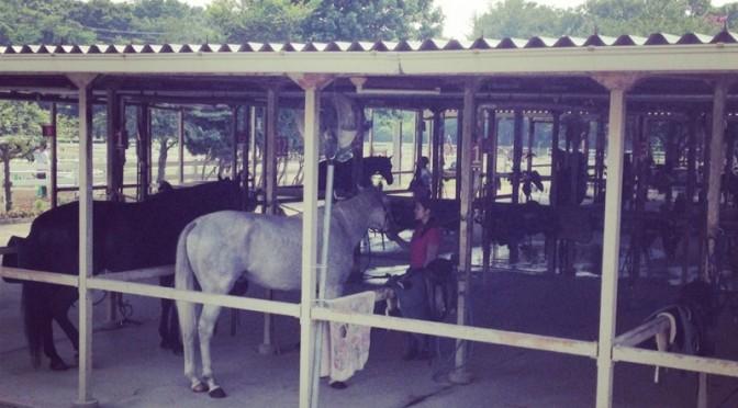 乗馬クラブクレインで体験乗馬 その2 (無口を外すの巻)
