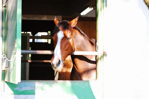 馬事公苑厩舎