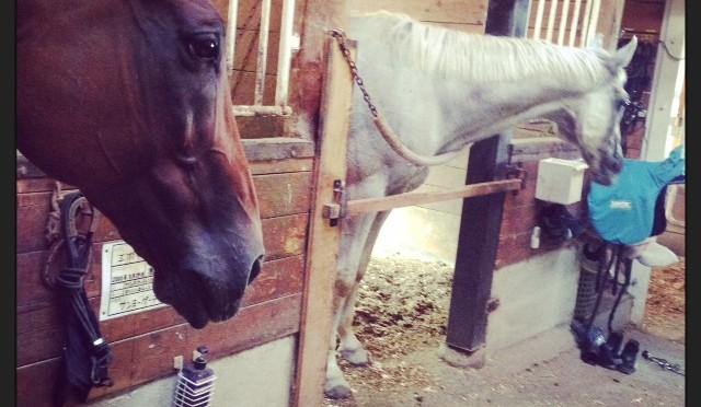 40鞍目-三度目の正直、お馬様にマウントを取るの巻