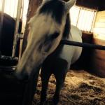 41鞍目-プライドの高い馬