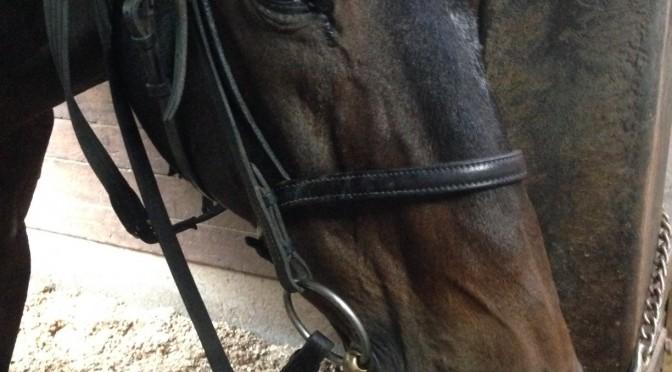 47鞍目(後編)-先生が乗ると別人ならぬ別馬になる件