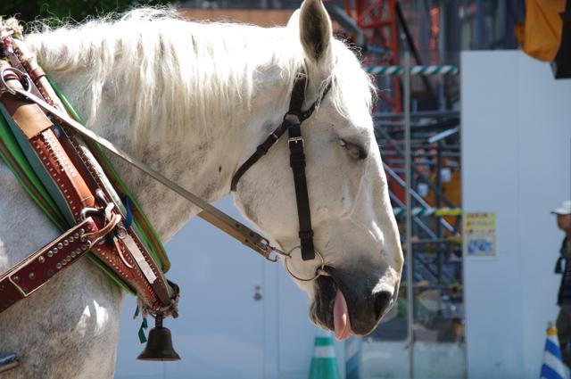 道産子とばんえい馬の違い