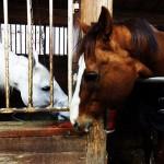 54鞍目-お馬様、仕事モードの巻