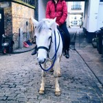 【寄稿】イギリス乗馬体験レポート(後篇)