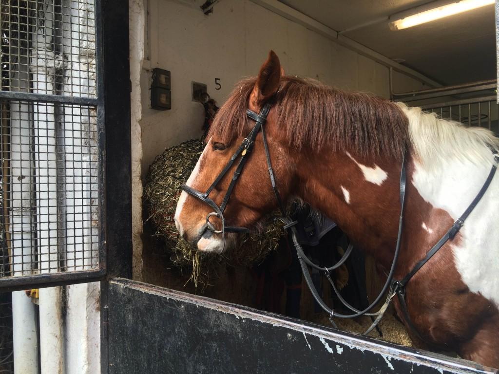 イギリスで乗馬体験