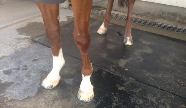【手入れ】脚がゴツゴツしたお馬様