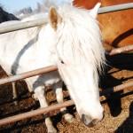 【馬旅】北海道1日目 ・夜編(馬好きのおじいさんに出会うの巻)