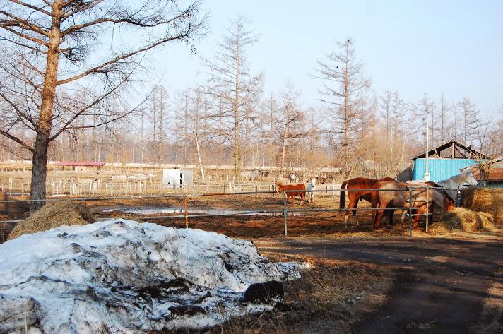 北海道の乗馬教室『MY STABLE』