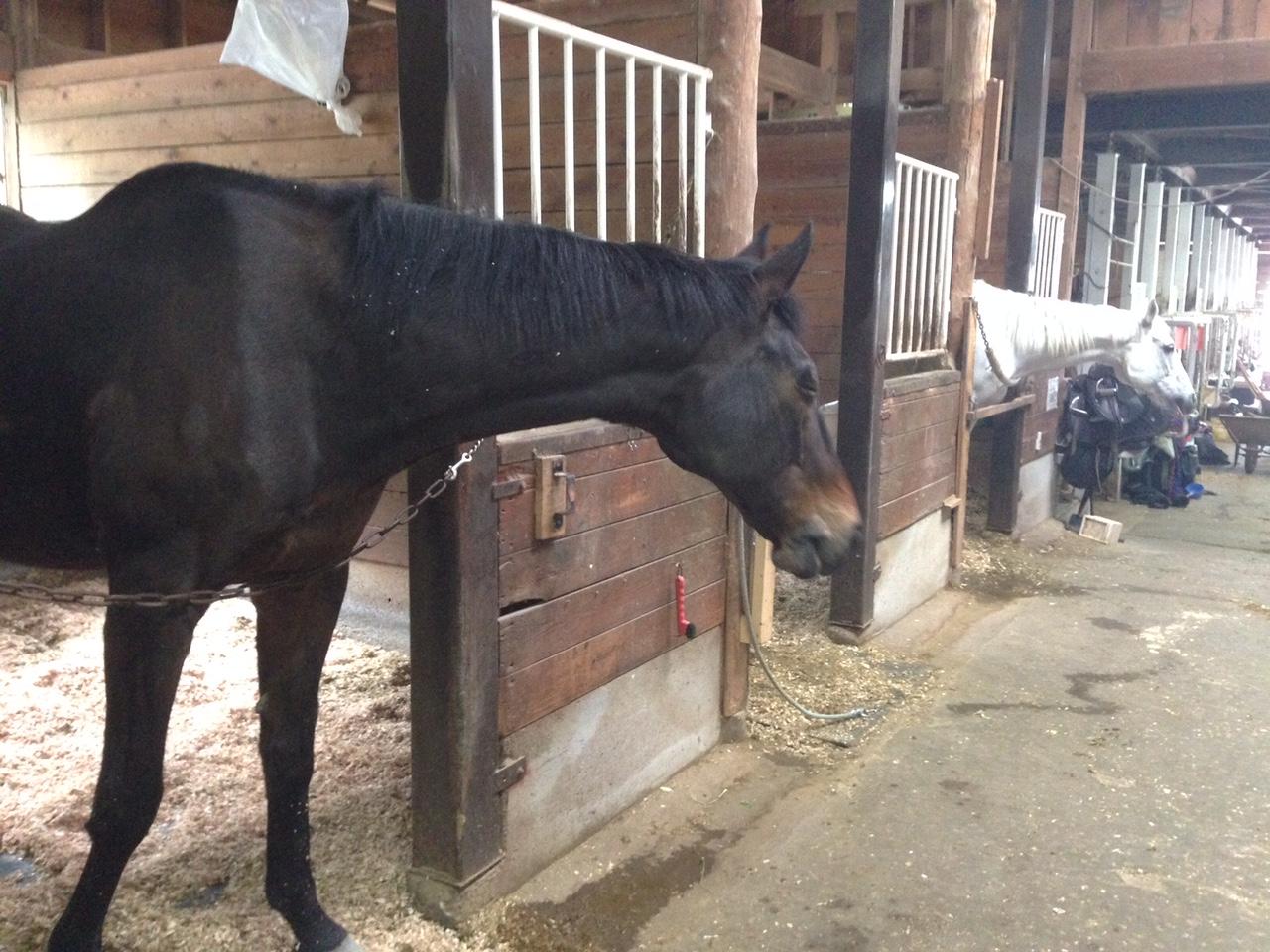 60鞍目 口の硬い馬と輪乗り