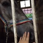 69鞍目-扶助(馬への指示)の強さレベル