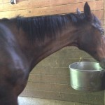 70鞍目-いつも先頭の馬が、2番手になったら…?の巻