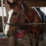 75鞍目-ぐいぐい前に出る馬、の巻