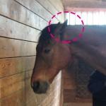 88鞍目-耳を伏せる馬の巻