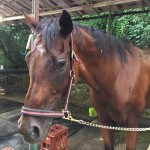 89鞍目-人間を試す馬、の巻
