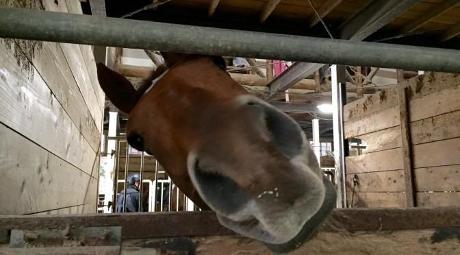 98鞍目-駈歩の発進・維持と横っ飛びの恐怖