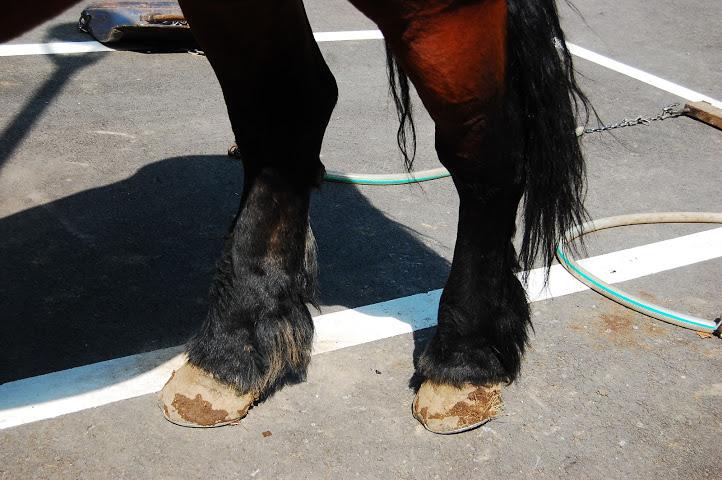 ばん馬の足