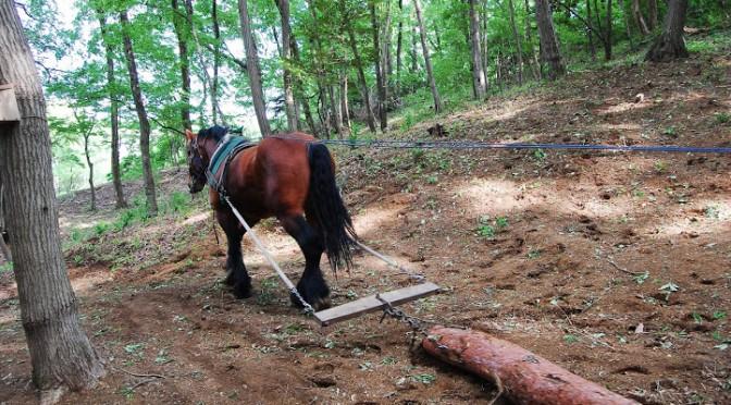 馬搬(ばはん)について学ぶ、の巻