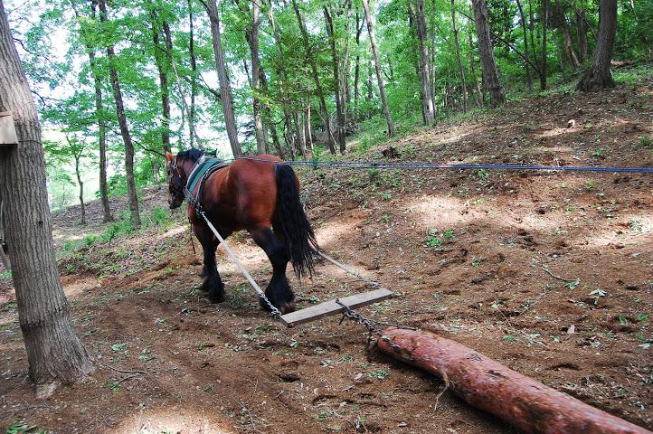 馬搬(はたらく馬フェス)