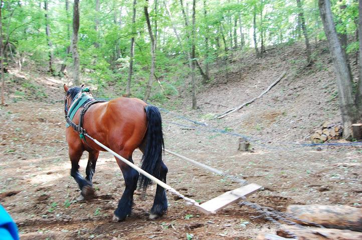 はたらく馬フェス 「馬搬」