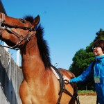 【速報】はたらく馬フェスに行ってきた【4/30】