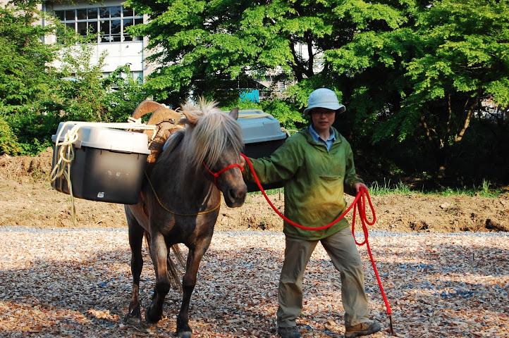 馬の背中に荷物を載せて運ぶ「駄載」に挑戦