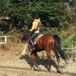 108鞍目-軽速歩の「座り」のときにしっかり膝を曲げる、の巻