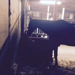 【速報】高齢馬のお手入れ、の巻