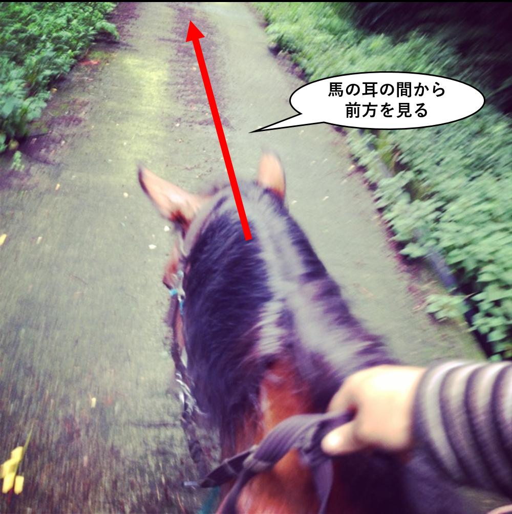 馬の耳の間から前方を見る