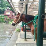 雨の日の乗馬! マンツーマンレッスン