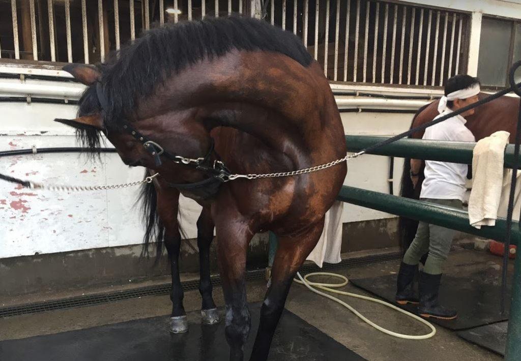 馬の水洗い