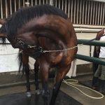 【手入れ】夏場限定!馬の丸洗い