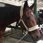 149鞍目‐最近重いと噂の馬