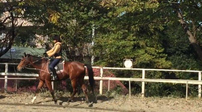 151&152鞍目‐『乗り手の不安は馬に伝わる』を実感した話