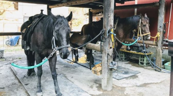 GOCOO HORSE VILLAGEに行ってみた(騎乗編)