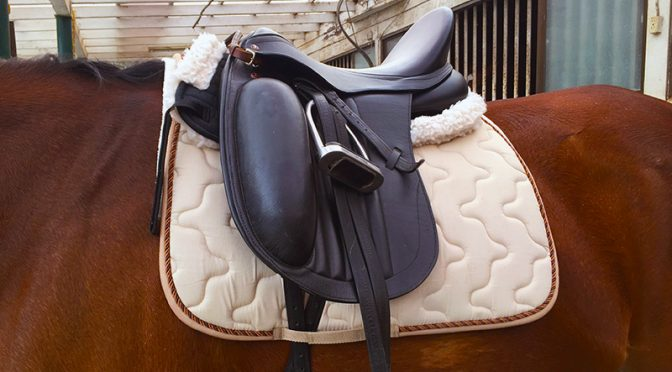 【Pacalla】初心者ライダーが購入を迷う乗馬用品とその金額