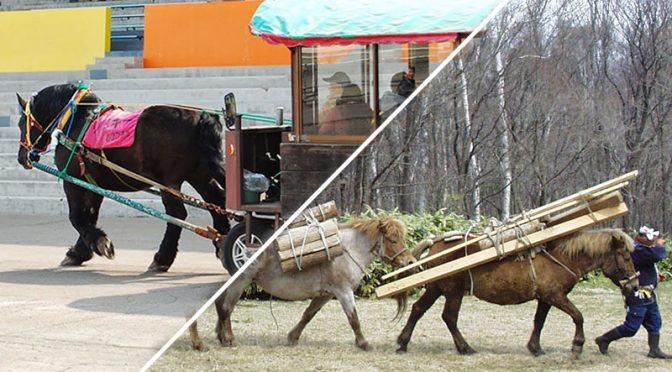【Pacalla】ばん馬とどさんこ(北海道和種)のちがい