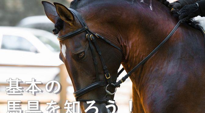 【Pacalla】基本の馬具を知ろう!