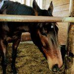171&172鞍目‐馬が外側に逃げていく(駈歩の輪乗り)