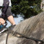167鞍目‐ポン!とお腹を蹴る扶助の話